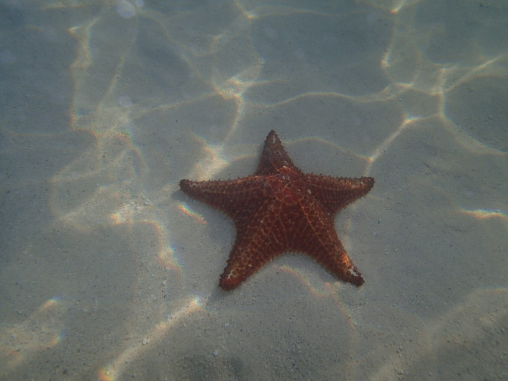 starfish point grand cayman